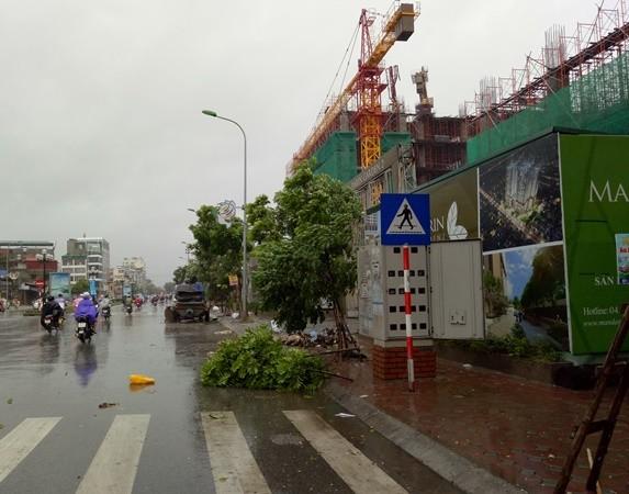 Mưa to, gió lốc làm đổ những cây nhỏ trồng trên tuyến đường Tân Mai