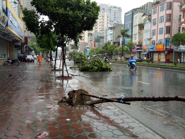 Cơn lốc ập đến bất ngờ khiến nhiều cây đổ một lúc trong khi một số người tham gia giao thông đang đi đến đoạn đường này (ảnh chụp lúc 7h00 sáng nay tại tuyến đường Tân Mai)
