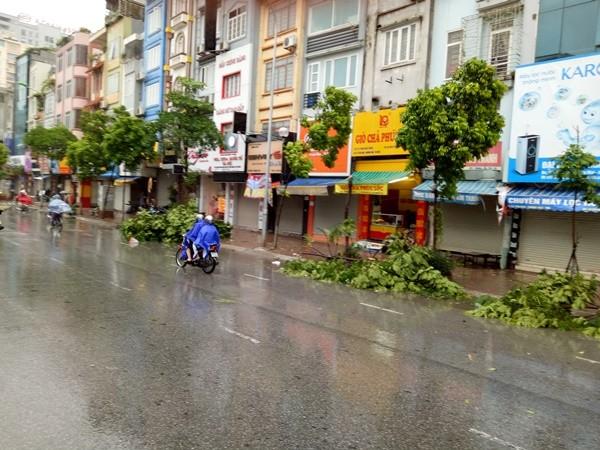 Nhiều cây mới trồng bị bật gốc và gãy cong trên tuyến đường Tân Mai