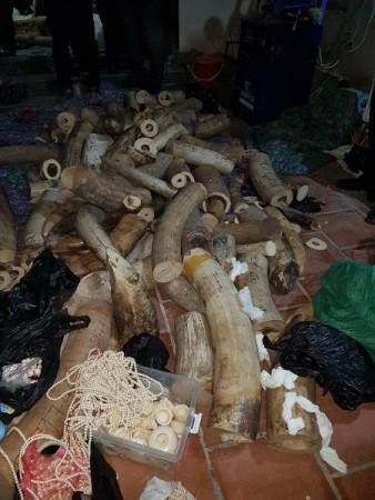 Ngà voi và các sản phẩm mỹ nghệ, đồ trang sức được chế tác từ ngà voi được lực lượng chức năng phát hiện, thu giữ tại nhà bà Nhương