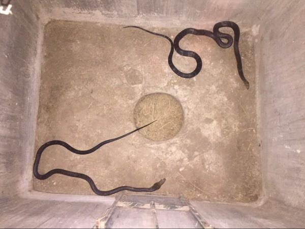 Đối tượng buôn bán động vật hoang giã quý hiếm bị CAH Mê Linh bắt giữ cùng tang vật