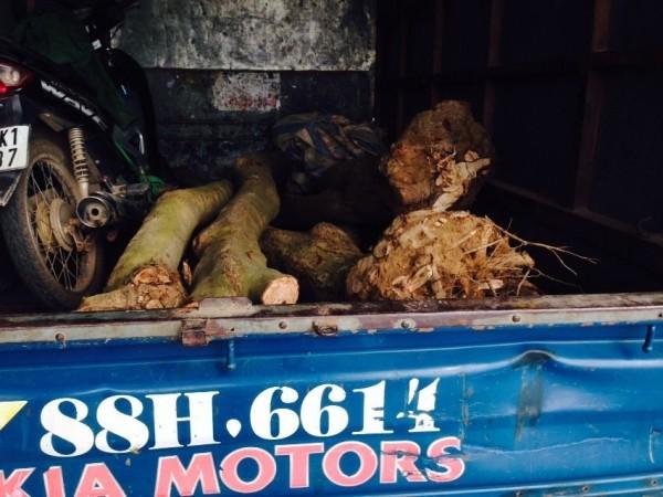 CSGT phát hiện 4 khúc gỗ sưa lớn trên xe tải ảnh 2