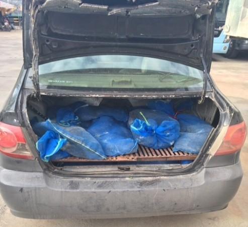 Số kỳ đà được nhét trong cốp xe phía sau
