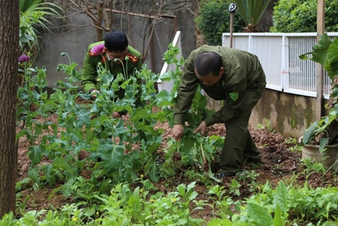 Số cây thuốc phiện được Dương Thị Cảnh trồng trong vườn nhà bị Công an TP Lạng Sơn phát hiện, nhổ bỏ