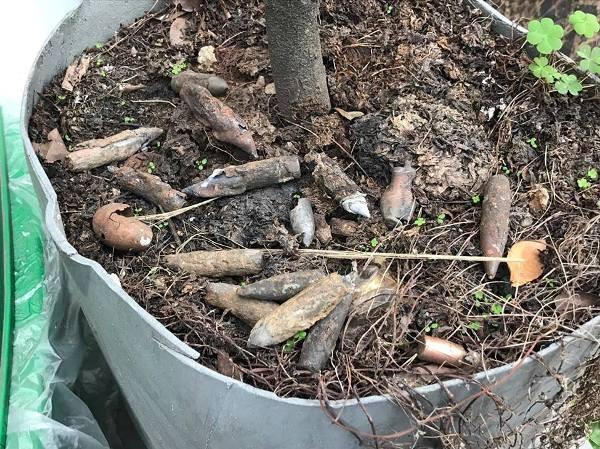 Một gốc cây bên đường trong xã Yên Môn bị găm hàng chục vỏ đạn sau vụ nổ