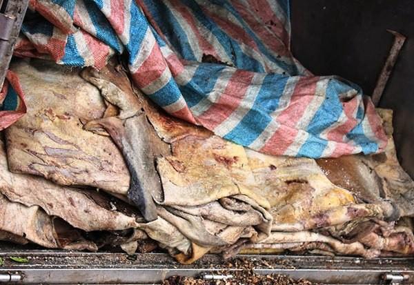 Gần 2 tấn mỡ và da trâu, bò đang trong quá trình phân hủy được bà Gái thuê người vận chuyển từ Vĩnh Phúc về Hà Nội để tiêu thụ đã bị lực lượng Cảnh sát môi trường, Công an tỉnh Vĩnh Phúc kịp thời phát hiện, bắt giữ và tiêu hủy