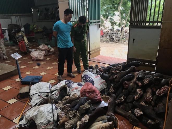 Hàng tấn chân bò và nội tạng gia súc được cơ sở này nhập lậu từ nước ngoài rồi vứt la liệt dưới nền nhà rất mất vệ sinh để nhân công sơ chế trước khi bán cho khách hàng