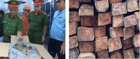 Số vẩy tê tê và gỗ hương bị thu giữ