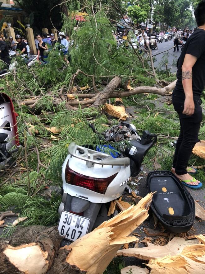 Hà Nội: Bàng hoàng cây cổ thụ đổ vật giữa đường, ít nhất 1 người nhập viện