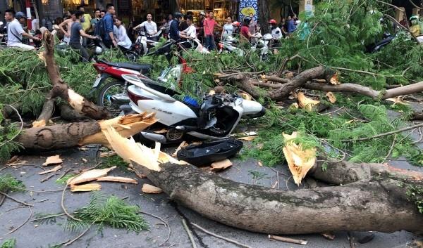 Người ngồi trên chiếc xe máy này bị cây đổ trúng