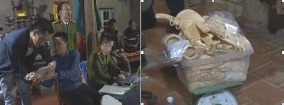 Lực lượng chức năng kiểm đếm số sản phẩm ngà voi bị thu giữ