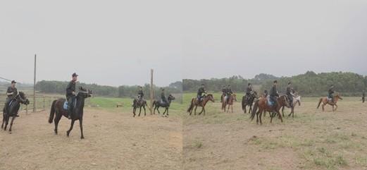 Hơn 100 cá thể ngựa đang được huấn luyện