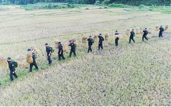 CBCS Trung đoàn CSCĐ Tây Bắc giúp dân gặt lúa