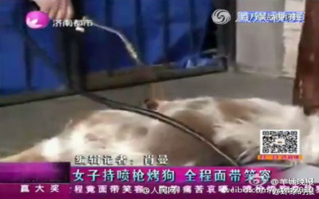 Phẫn nộ cảnh cô gái xinh đẹp thản nhiên thiêu chết một con chó ảnh 2