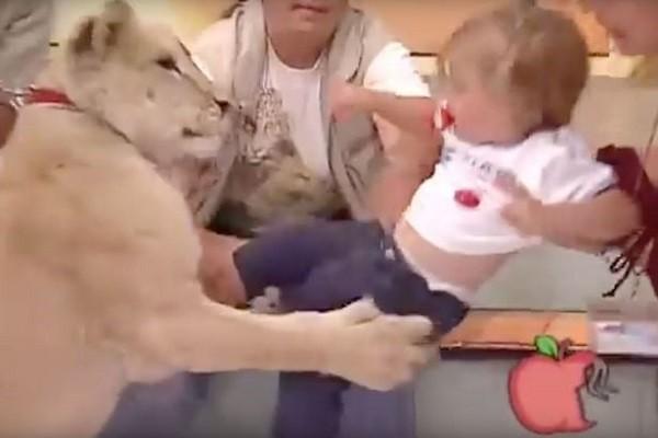 Cảnh bé gái bị sư tử tấn công trên truyền hình