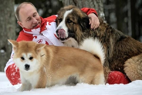 Tổng thống Putin là một người yêu động vật