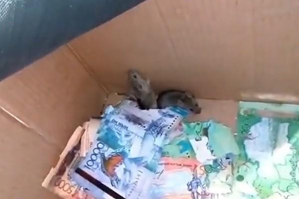Số tiền bị hai con chuột cắn nát
