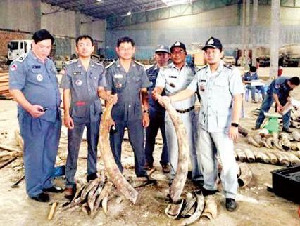 Số ngà voi bị thu giữ
