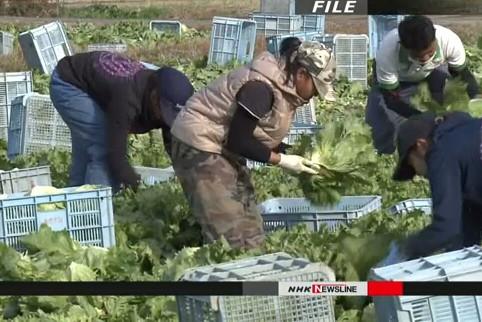 Số lao động Việt Nam tại Nhật Bản tăng khoảng 30%, mức tăng cao nhất