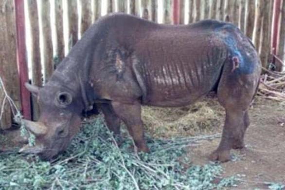 Tê giác Fausta đã qua đời vào ngày 27-12