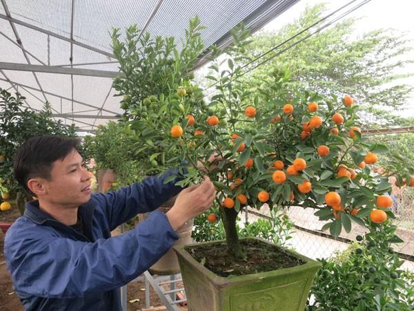 Anh Phạm Ngọc Hiếu chăm chút cho cây quất bonsai
