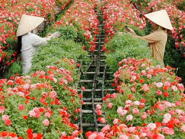 Sa Đéc - thành phố hoa chốn miệt vườn ảnh 1