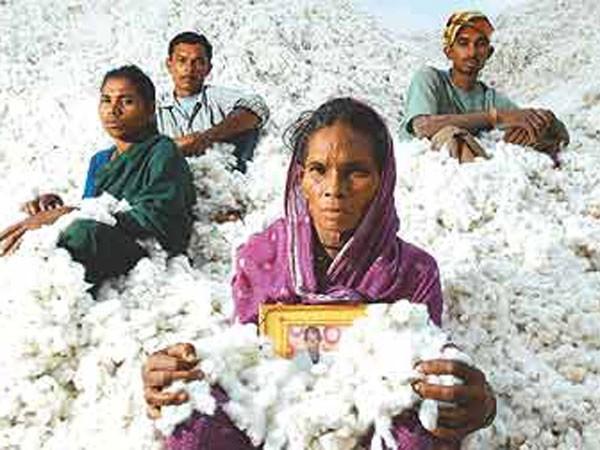 Lối thoát cay đắng của người nông dân Ấn Độ ảnh 1