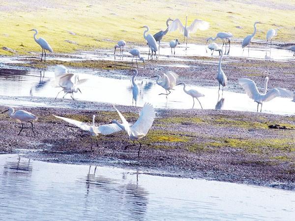 Tràm chim ở cửa Ba Lạt, nơi con sông Hồng hoà vào với biển ảnh 1