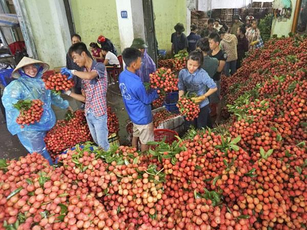 Tính kế lâu dài cho quả vải Việt Nam ảnh 1
