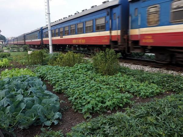 Nhức nhối ATGT đường sắt: Càng kiểm tra càng ra vi phạm ảnh 1