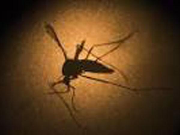 Muỗi vẫn được biết đến là trung gian truyền virus Zika