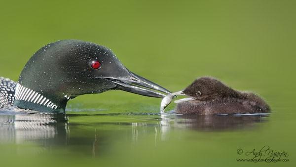 Những bức ảnh ấn tượng về thế giới động vật hoang dã