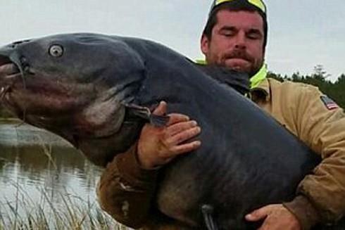 Bắt được cá da trơn khổng lồ ở Mỹ