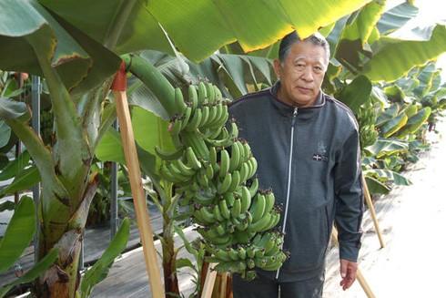 """Lão nông Setsuzo Tanaka với phương pháp """"thức tỉnh rã đông"""" để trồng chuối"""