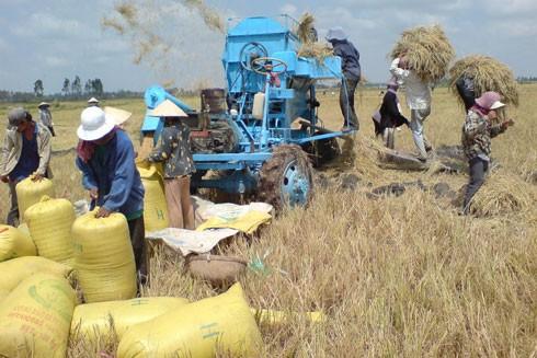 Gạo thế giới tồn kho, gây khó cho xuất khẩu ảnh 1