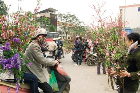 Không khí mùa xuân rộn ràng ở chợ hoa Quảng Bá hiện lên sinh động trên kênh CNN