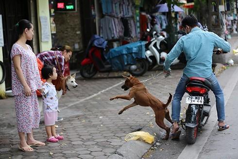 Chó khi đưa ra nơi công cộng cần được đeo rọ mõm và có người dắt