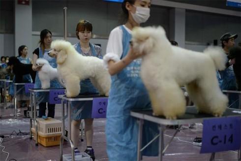 Các trung tâm chăm sóc thú cưng đang nở rộ tại Hàn Quốc