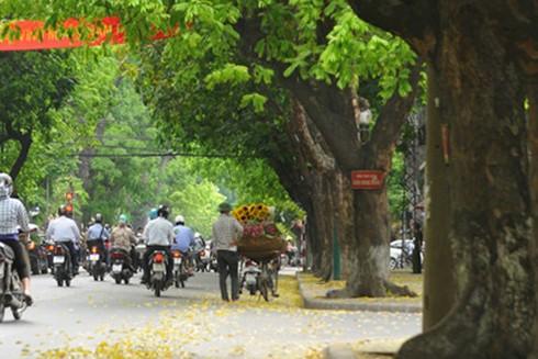 Đường Trần Phú mang nét đẹp rất riêng vào mỗi mùa lá rụng