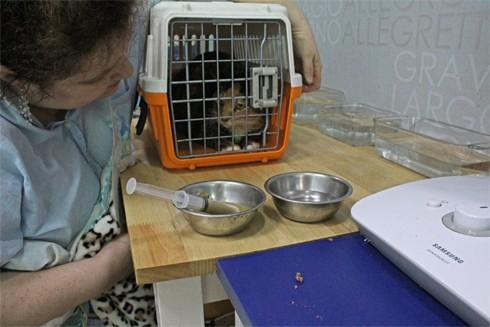 """Chuyện về những """"chuyên gia"""" giải cứu động vật đi lạc ở Hàn Quốc ảnh 1"""