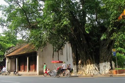 Cây đa ở đền Bà Kiệu