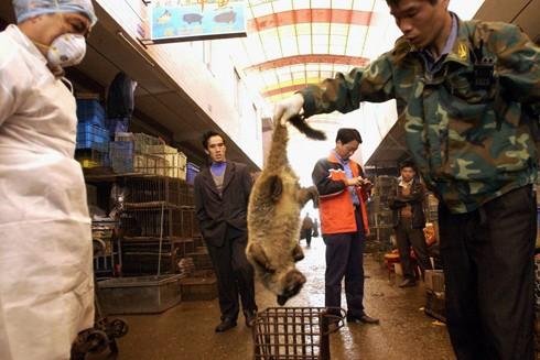Trung Quốc: Đóng cửa ngay thị trường động vật hoang dã để tránh họa lớn ảnh 1