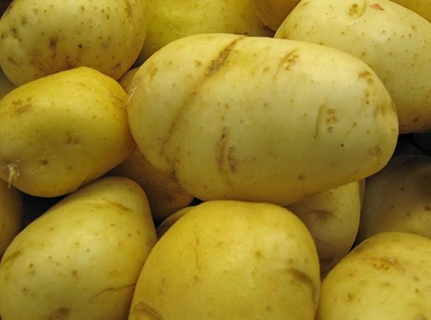 Khoai tây được cho là thực phẩm thích hợp nhất trong môi trường chiến tranh khắc nghiệt