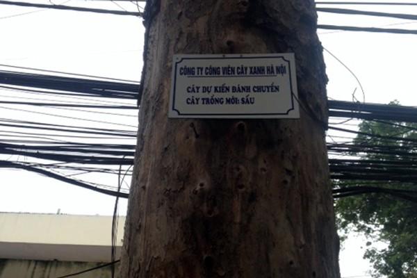 Treo biển, xin ý kiến người dân về việc thay thế cây xanh ảnh 1