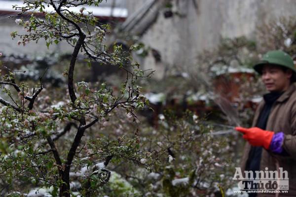 Ngắm những hình ảnh băng tuyết đầu tiên tại Sapa ảnh 6