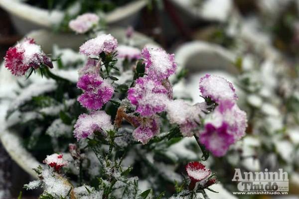 Ngắm những hình ảnh băng tuyết đầu tiên tại Sapa ảnh 5