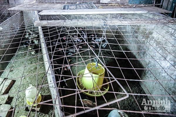 Xem tận mắt cảnh trồng rau, nuôi lợn, thả cá giữa trung tâm Hà Nội ảnh 4