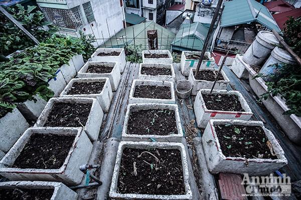 Xem tận mắt cảnh trồng rau, nuôi lợn, thả cá giữa trung tâm Hà Nội ảnh 7
