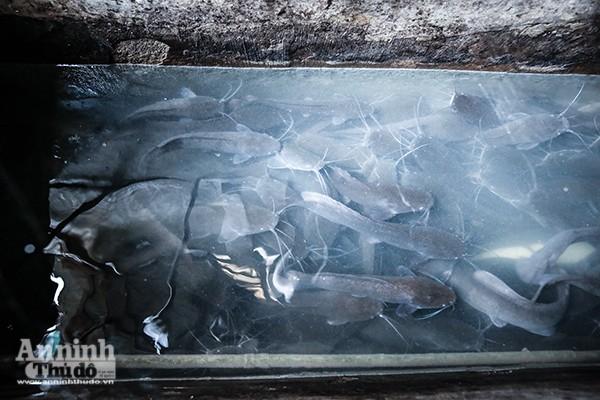 Xem tận mắt cảnh trồng rau, nuôi lợn, thả cá giữa trung tâm Hà Nội ảnh 8