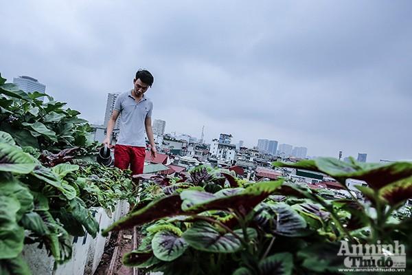 Xem tận mắt cảnh trồng rau, nuôi lợn, thả cá giữa trung tâm Hà Nội ảnh 12